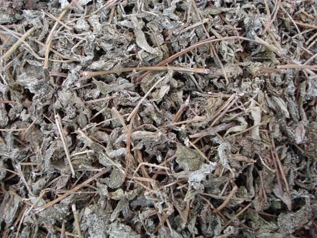 Сухой лист Куганьлу